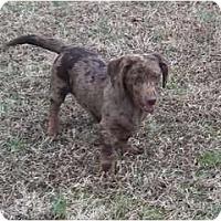 Adopt A Pet :: Cate - Adamsville, TN