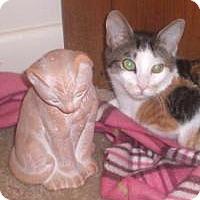 Adopt A Pet :: Pocahontas - Stafford, VA