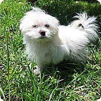 Adopt A Pet :: Powder - Fort Lauderdale, FL