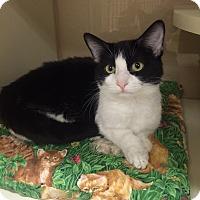Adopt A Pet :: Sophie - Wickenburg, AZ