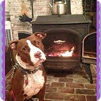 Adopt A Pet :: Honey - Sterling, MA