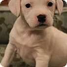 Adopt A Pet :: Miki