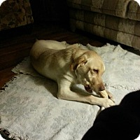 Adopt A Pet :: Jasmine( adoption pending) - Upper Sandusky, OH