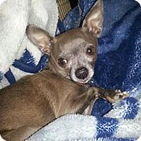 Adopt A Pet :: Jersey - Catharpin, VA