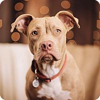 Adopt A Pet :: Mischa - Portland, OR