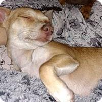 Adopt A Pet :: Denise - Beavercreek, OH