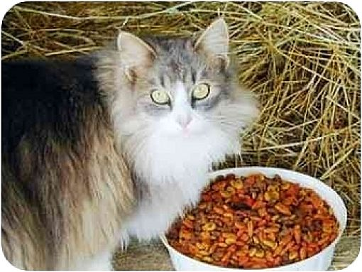 Domestic Mediumhair Cat for adoption in blairsville, Georgia - Barn Cats-Male/Fem
