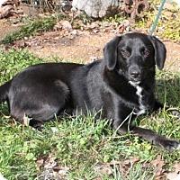 Adopt A Pet :: Peppermint Patty - Salem, NH