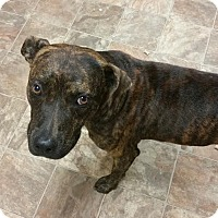 Adopt A Pet :: Dallas - Darlington, SC