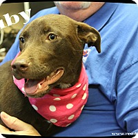 Adopt A Pet :: Ruby - Rockwall, TX