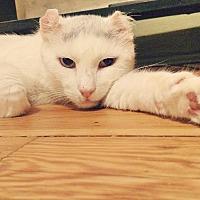 Adopt A Pet :: Ragnar - Brooklyn, NY