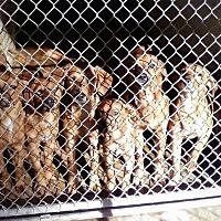 Adopt A Pet :: 10/29/16 6 puppy's - Magnolia, AR