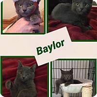 Adopt A Pet :: Baylor - Arlington/Ft Worth, TX