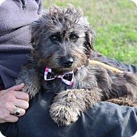Adopt A Dog Lacey Wa