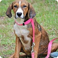 Adopt A Pet :: Neva - Hazlehurst, GA