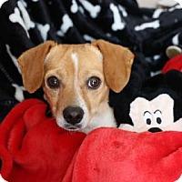 Adopt A Pet :: Jerry - Yucaipa, CA