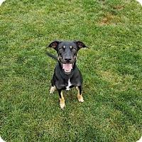 Adopt A Pet :: Lana - Edmonton, AB