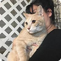 Adopt A Pet :: Dancer - Honolulu, HI