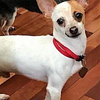 Adopt A Pet :: Marco Paco - Spartanburg, SC