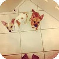 Adopt A Pet :: Tarzan & Charlotte - Santa Ana, CA