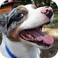 Adopt A Pet :: Porter - Available SOON - Savannah, GA