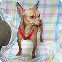 Adopt A Pet :: Patrone - Seattle, WA