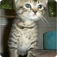 Adopt A Pet :: Ludlum - Reston, VA