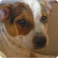 Adopt A Pet :: Frisky (adoption pending) - Phoenix, AZ