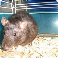 Adopt A Pet :: Thelma - Cincinnati, OH