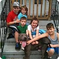 Adopt A Pet :: Blueberry - Dallas, PA