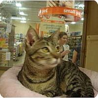 Adopt A Pet :: Petsmart Mindy II - Owasso, OK