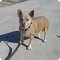 Adopt A Pet :: Pixie - Tracy, CA
