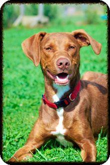 Adopt A Prison Dog In Ohio