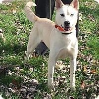 Adopt A Pet :: Sheba - Zanesville, OH