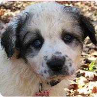 Adopt A Pet :: Rowan - Kyle, TX