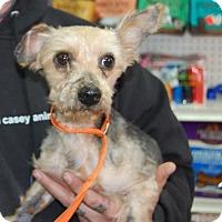 Adopt A Pet :: Leeroy - Brooklyn, NY