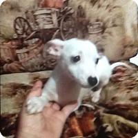Adopt A Pet :: Thor - springtown, TX