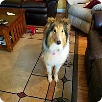 Adopt A Pet :: Mollie - Chesapeake, VA