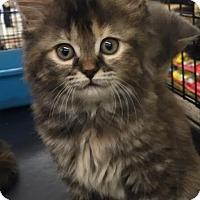 Adopt A Pet :: Mora - Ortonville, MI