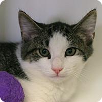 Adopt A Pet :: Denny - Staunton, VA