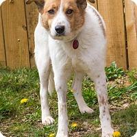 Adopt A Pet :: MooMoo - Enfield, CT