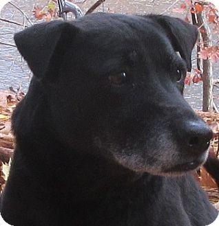 Labrador Retriever Mix Dog for adoption in Port Jervis, New York - Chloe