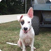 Adopt A Pet :: MacKenzie - Decatur, AL