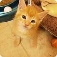 Adopt A Pet :: Ron - Hampton, VA