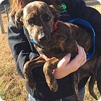 Adopt A Pet :: Elle - Foster, RI