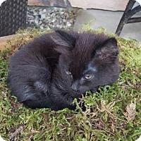Adopt A Pet :: Kona - Wenatchee, WA