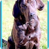 Adopt A Pet :: Caspian - Sullivan, IN