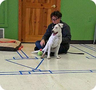 Pointer/Great Dane Mix Puppy for adoption in Albuquerque, New Mexico - Owen