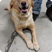 Adopt A Pet :: Lolli - Huntington, IN