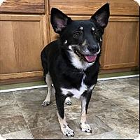 Adopt A Pet :: Dixie - Shreveport, LA